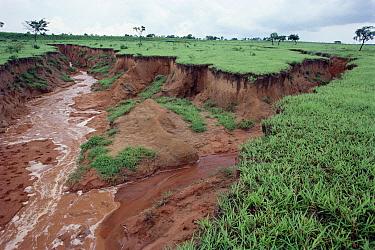 Erosion, Pantanal, Brazil  -  Claus Meyer