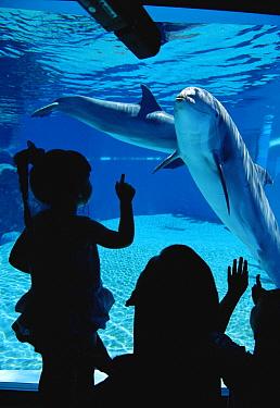 Bottlenose Dolphin (Tursiops truncatus) pair, Mirage Hotel, Las Vegas, Nevada  -  Claus Meyer