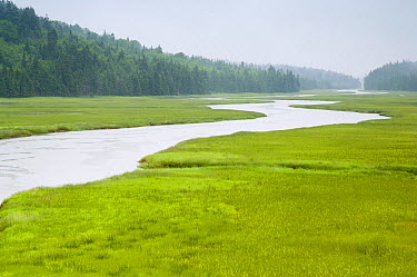 Salt marsh and estuary along shore, New Brunswick, Canada  -  Scott Leslie
