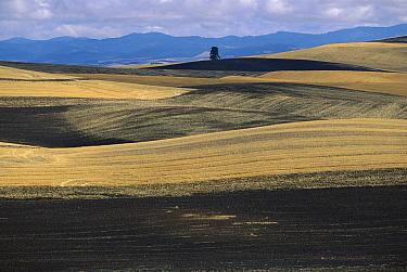 Ploughed wheat fields after harvest in autumn, Palouse Hills, Washington  -  Yva Momatiuk & John Eastcott