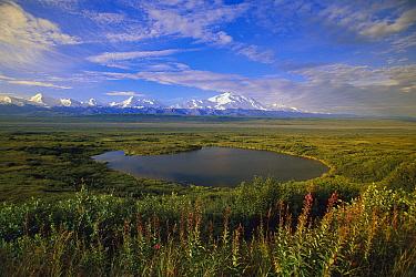 Glacial kettle pond with Alaska Range and Mount McKinley in distance, Denali National Park and Preserve, Alaska