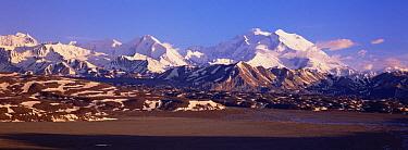 Mt Denali covered in spring snow, evening light, Denali National Park and Preserve, Alaska  -  Yva Momatiuk & John Eastcott