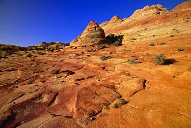 Colorful sandstone patterns of petrified sand dunes and ridges created by erosion, near Paria River, Vermilion Cliffs National Monument, Colorado Plateau, Utah  -  Yva Momatiuk & John Eastcott