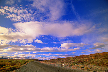 Cumulus clouds over autumn tundra, Ogilvy Mountain in the distance, Dempster Highway, Yukon, Canada  -  Yva Momatiuk & John Eastcott