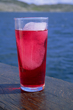 Lemonade in glass, with chunks of iceberg ice, lately considered a delicacy aboard boats, Labrador Sea, Labrador, Canada  -  Yva Momatiuk & John Eastcott