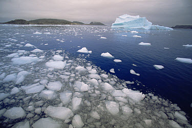 Distant view of iceberg showing grooves created by rising air bubbles, summer, Saglek Fjord, Labrador, Newfoundland, Canada  -  Yva Momatiuk & John Eastcott
