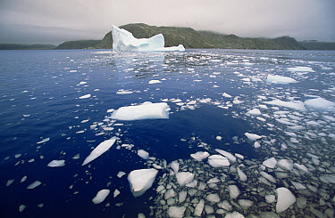 Iceberg breaking up and releasing pieces of ice called bergy bits which float and melt, late summer season, Saglek Fjord, Newfoundland, Canada  -  Yva Momatiuk & John Eastcott