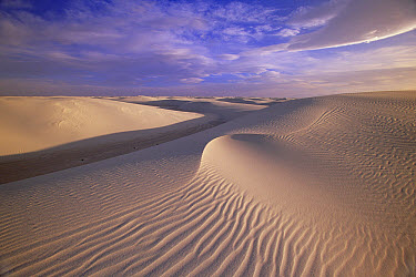 Sand dunes of fine gypsum particles textured by wind, changing winds form cross-grooves, evening, White Sands National Monument, New Mexico  -  Yva Momatiuk & John Eastcott