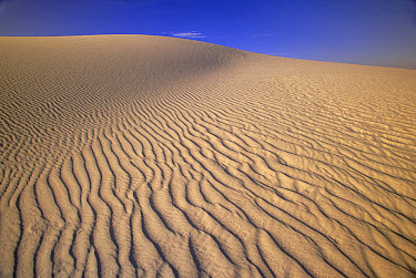 Sand dunes of fine gypsum particles textured by wind and hiker's footprints, changing winds form cross-grooves, evening, White Sands National Monument, New Mexico  -  Yva Momatiuk & John Eastcott
