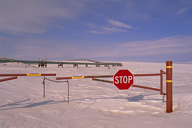 Stop sign on dirt road leading to Alyeska oil pipeline, North Slope, Alaska  -  Yva Momatiuk & John Eastcott