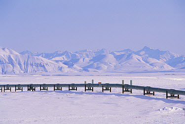 Alaska oil pipeline between Prudhoe and Port of Valdez, owned by Alyeska Company, crosses Brooks Range, North Slope, Alaska  -  Yva Momatiuk & John Eastcott