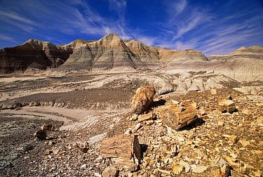 Logs and chunks of petrified wood rest on slopes and small hills near dry washes, Petrified Forest National Park, Arizona  -  Yva Momatiuk & John Eastcott