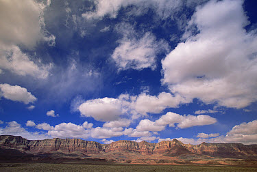 Vermilion Cliffs near Marble Canyon, spring cumulus clouds, northern Arizona  -  Yva Momatiuk & John Eastcott