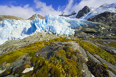 Glacier receding over golden tundra slope, with grasses, lichen, moss, rocks and erratic boulders, fall morning, Salversen Range, Smaaland Cove, South Georgia Island, Southern Ocean, Antarctic Converg...  -  Yva Momatiuk & John Eastcott