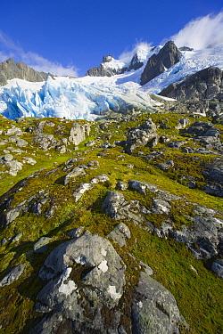 Blue glacier receding on green and golden tundra slope, with grasses, lichen, moss, rocks and boulders, fall morning, Salversen Range, Smaaland Cove, South Georgia Island, Southern Ocean, Antarctic Co...  -  Yva Momatiuk & John Eastcott