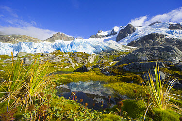 Blue glacier receding and small tarn or pond, on green and golden tundra slope, with grasses, lichen, moss, rocks and erratic boulders, fall morning, Salversen Range, Smaaland Cove, South Georgia Isla...  -  Yva Momatiuk & John Eastcott