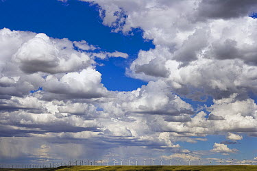 Large windfarm at work on ridge in high desert grasslands with a multitude of turning turbines and a big sky full of cumulus clouds, summer, noon, Wyoming  -  Yva Momatiuk & John Eastcott