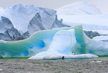 Adelie Penguin (Pygoscelis adeliae) standing on iceberg with Crabeater Seal (Lobodon carcinophagus) approaching, western Antarctica  -  Yva Momatiuk & John Eastcott