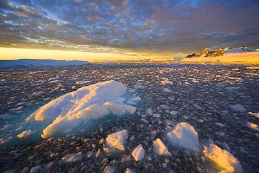 Floating ice bits and coastline at sunset, Wiggins Glacier, Antarctica  -  Yva Momatiuk & John Eastcott