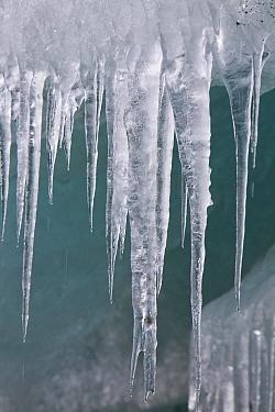 Icicles of melting Graae Glacier, Trollhul, South Georgia Island  -  Yva Momatiuk & John Eastcott