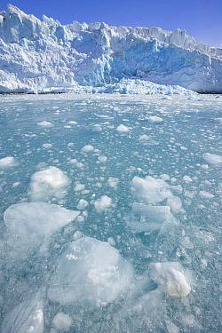 Ice columns and broken ice floes of Fortuna Glacier descending to sea, Antarctic Bay, South Georgia Island  -  Yva Momatiuk & John Eastcott