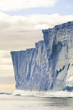 Massive tabular iceberg and seabirds flying around its base near South Georgia Island  -  Yva Momatiuk & John Eastcott