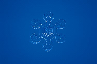 Snowflake seen through microscope at 25 times power, Japan  -  Toshio Wakui/ Nature Production