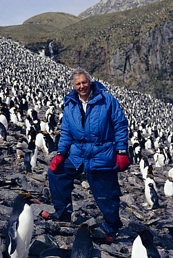 David Attenborough in Macaroni Penguin (Eudyptes chrysolophus) colony South Georgia 1992 On location for BBC tv series 'Life in the Freezer'  -  Ben Osborne/ npl