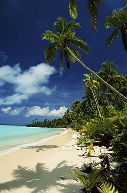 Coconut Palm, beach and coral lagoon Aitutaki, Cook Islands  -  Phil Chapman/ npl