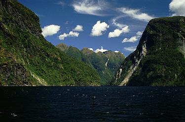 Milford Sound, Fjordland Nationl Park, South Island, New Zealand  -  Phil Chapman/ npl