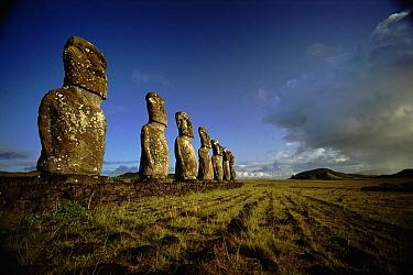 Giant Moai statues Ahu Kivi, southern Easter Island, Chile  -  Phil Chapman/ npl