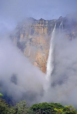 Angel Falls, Canaima National Park, Venezuala  -  David Welling/ npl