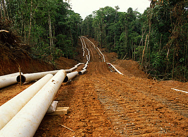 Laying pipeline for oil extraction in rainforest, Ecuador  -  Morley Read/ npl