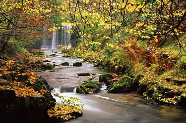 Sgwd yr Eira waterfall, Brecon Beacons National Park, Wales  -  David Noton/ npl