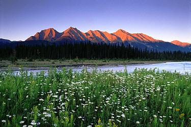 Rocky Mountains, Kootenay National Park, British Columbia, Canada  -  David Noton/ npl