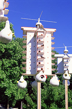 Purple Martin (Progne subis) nest boxes, Pennsylvania  -  Adam White/ npl