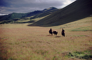Riders and packhorse in grassy meadow, Hangay Mountains, Mongolia  -  Martha Holmes/ npl