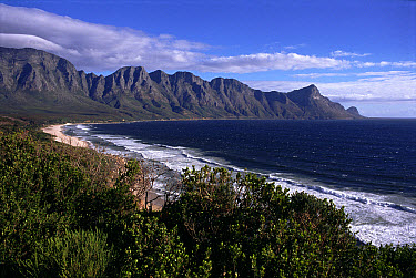 Cape Province coastline, near Cape Town, South Africa  -  Mark Payne-Gill/ npl