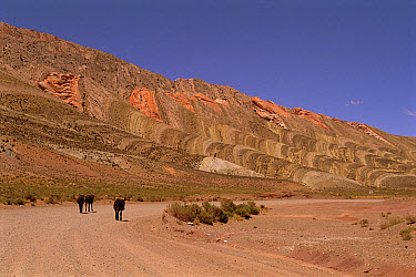 Donkeys on road, Andes foothills, Quebrada de Humahuaca, Argentina  -  Ross Couper-Johnston/ npl