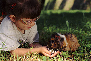 Guinea Pig (Cavia porcellus), Italy  -  Fabio Liverani/ npl