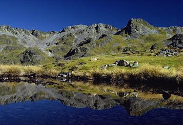 Nelson Lakes National Park, New Zealand  -  Albert Aanensen/ npl