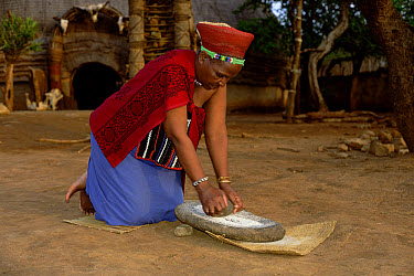 Zulu woman grinding corn, Natal, South Africa  -  Pat De La Harpe/ npl