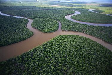 Aerial view of silted Mangrove Swamp, Antsiranana, Madagascar  -  Claudio Velasquez/ npl
