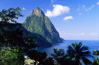 Petit Piton viewed from above Soufriere, St Lucia, West Indies, Caribbean  -  Nigel Bean/ npl