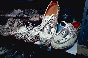 Burmese Python (Python molurus bivittatus) and Monocled Cob ra (Naja naja kaouthia) snake skin shoes for sale, Bankok, Thailand  -  Jabruson/ npl