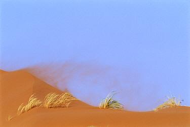 Namib Desert landscape with wind blowing sand, Sesriem Valley, Namibia  -  Vincent Munier/ npl