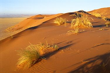 Namib Desert landscape Sesriem Valley, Namibia  -  Vincent Munier/ npl