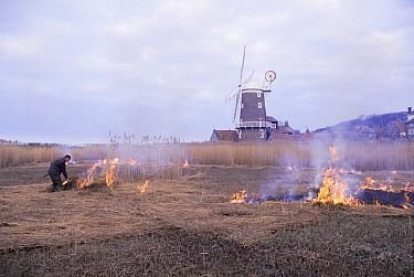 Burning reeds at Cley, Norfolk, United Kingdom  -  Terry Andrewartha/ npl