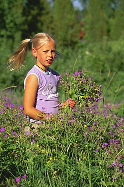 Child picking Cranesbill flowers for midsummer holiday, Sweden  -  Bengt Lundberg/ npl