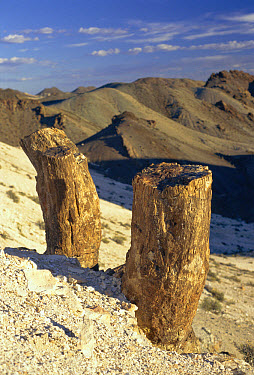 Petrified trees, Petrified Forest National Monument, Argentina  -  Daniel Gomez/ npl